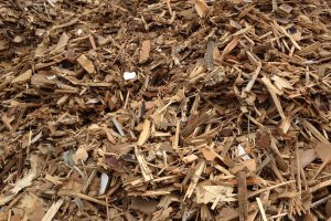 Waste Wood Shredded