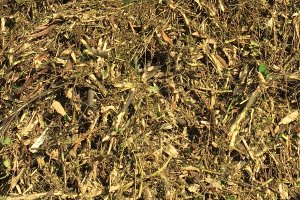 Biomass Shredded
